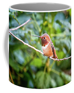 Humming Bird On Stick Coffee Mug by Stephanie Hayes