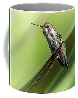Hummingbird 7484-101017-2cr Coffee Mug