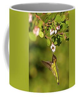 Hummingbird And Manzanita Blossom Coffee Mug
