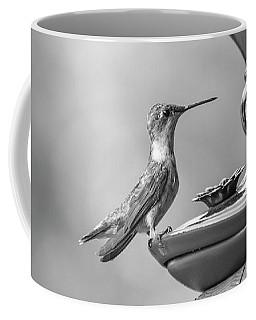 Hummingbird Intrigue  Coffee Mug