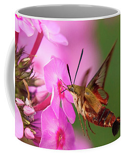 Hummingbird Moth Feeding 1 Coffee Mug