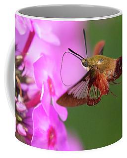 Hummingbird Moth Feeding 2 Coffee Mug