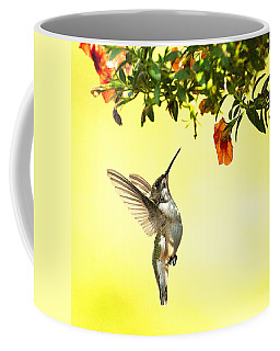 Hummingbird Under The Floral Canopy Coffee Mug