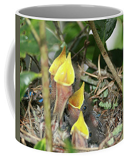 Hungry Baby Birds Coffee Mug
