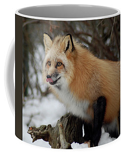 Coffee Mug featuring the photograph Hungry Fox by Richard Bryce and Family