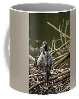 Hungry Pied Shag Chicks Coffee Mug by Racheal Christian