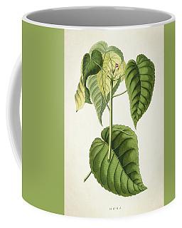 Hura Botanical Print Coffee Mug