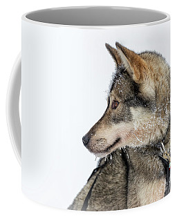 Coffee Mug featuring the photograph Husky Dog by Delphimages Photo Creations