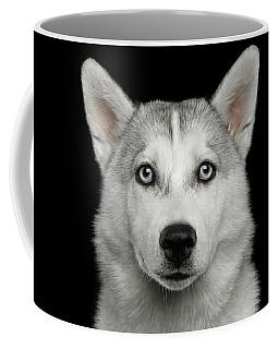 Coffee Mug featuring the photograph Husky Puppy by Sergey Taran