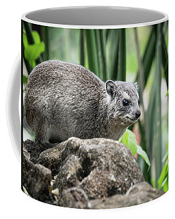 Hyrax Coffee Mug