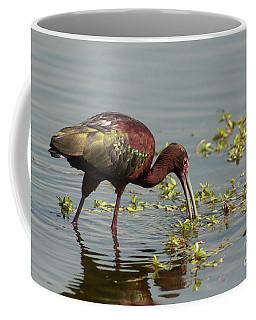 Ibis Lit Up - Morning Coffee Mug