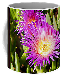 Ice Plant Blossom Coffee Mug