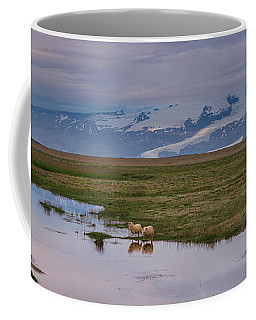 Iceland Sheep Reflections Panorama  Coffee Mug