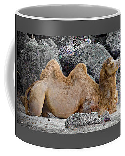 Coffee Mug featuring the photograph I'd Walk A Mile by Judy Kay