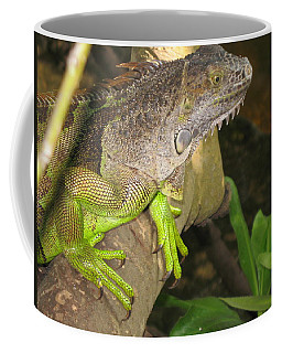 Coffee Mug featuring the photograph Iguana - A Special Garden Guest by Christiane Schulze Art And Photography
