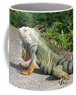 Coffee Mug featuring the photograph Iguania Sunbathing by Christiane Schulze Art And Photography