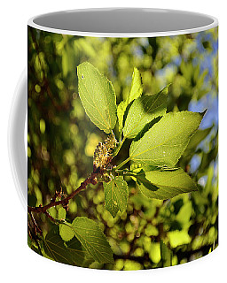 Coffee Mug featuring the photograph Illuminated Leaves by Ron Cline