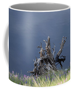 Stump Chambers Lake Hwy 14 Co Coffee Mug