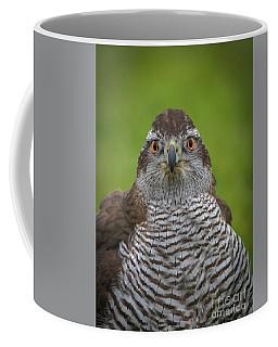 I'm Watching You Coffee Mug by Mitch Shindelbower