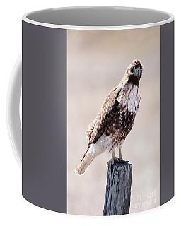 Immature Red Tailed Hawk Coffee Mug