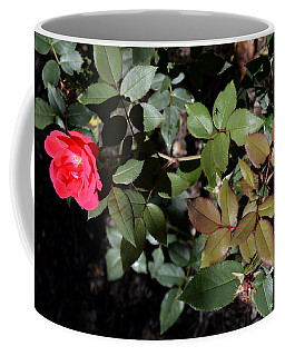 Coffee Mug featuring the photograph In Bloom by W And F Kreations