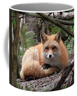 In Hiding Red Fox Coffee Mug