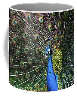 Indian Peacock With Tail Feathers Up Coffee Mug