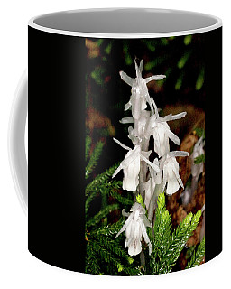 Coffee Mug featuring the photograph Indian Pipes On Club Moss by Meta Gatschenberger