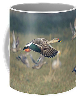 Indian Spot-billed Duck 01 Coffee Mug