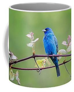 Indigo Bunting Perched Coffee Mug