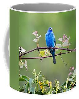 Indigo Bunting Perched Square Coffee Mug