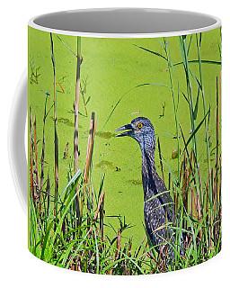 Inmature Black Crowned Heron. Coffee Mug