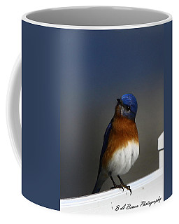 Inquisitive Bluebird Coffee Mug