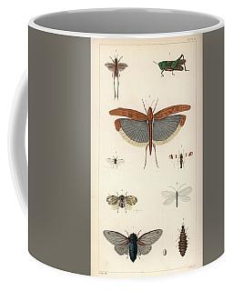 Insects, Plate IIi Coffee Mug