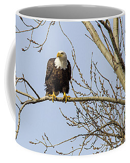Intent Bald Eagle Coffee Mug