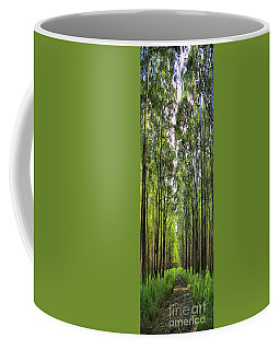 Coffee Mug featuring the photograph Into The Forest I Go by DJ Florek