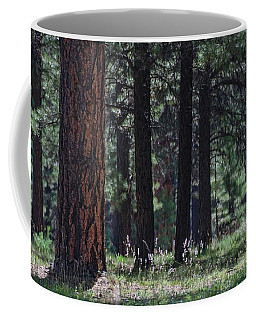 Coffee Mug featuring the photograph Into The Light There Be Shadows by Gaelyn Olmsted