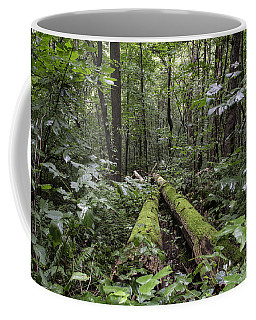 Coffee Mug featuring the photograph Into The Woods by Jeannette Hunt