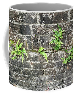 Coffee Mug featuring the photograph Intrepid Ferns by Kim Nelson