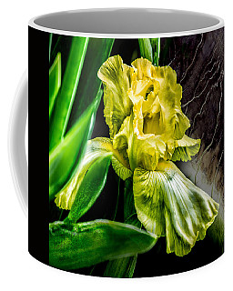 Iris In Bloom Two Coffee Mug
