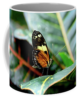 Ismenius Tiger Butterfly-2 Coffee Mug