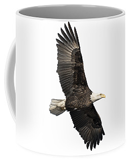 Isolated American Bald Eagle 2016-4 Coffee Mug