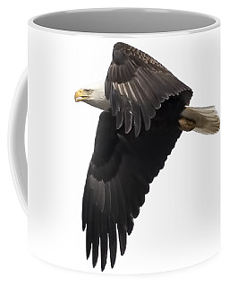 Isolated American Bald Eagle 2016-6 Coffee Mug