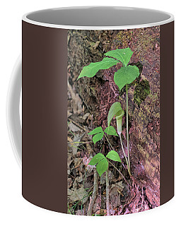 Coffee Mug featuring the photograph Jack-in-the-pulpit by Richard Goldman