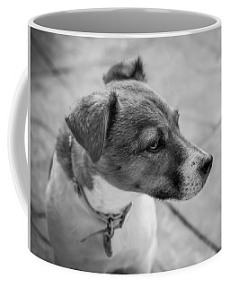 Coffee Mug featuring the photograph Jack Russell by Nick Bywater