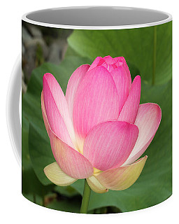 Japanese Lotus Almost Ready To Bloom Coffee Mug