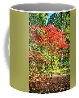 Japanese Red Maple Tree Coffee Mug