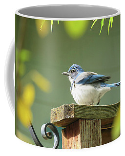 Scrub Jay On A Fence - Images From The Fall Garden Coffee Mug by Brooks Garten Hauschild