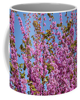 Judas Tree In Pink, Haela Valley Near To Modiin Coffee Mug