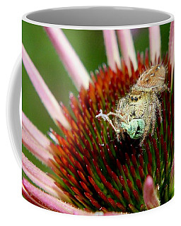 Jumping Spider With Green Weevil Snack Coffee Mug